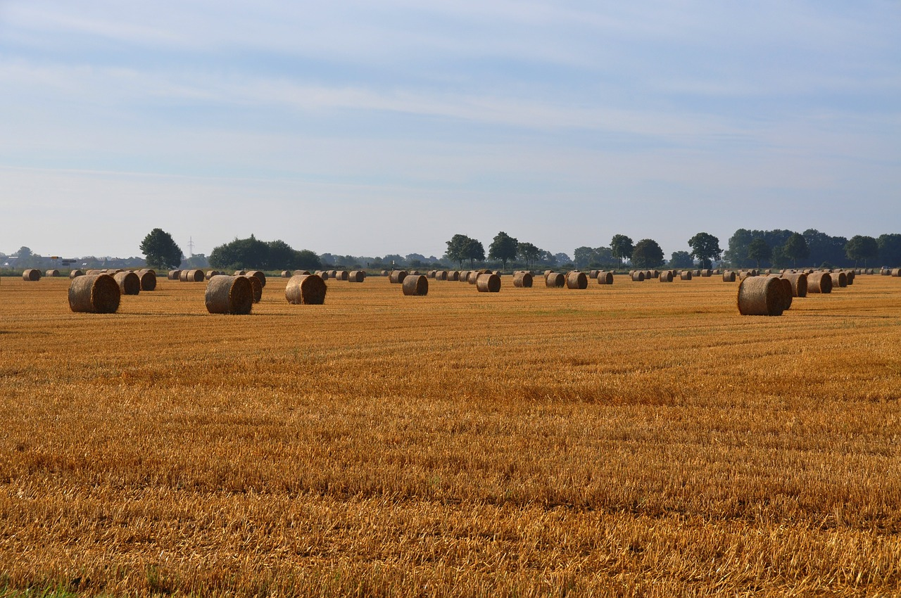 hay harvest bale free photo