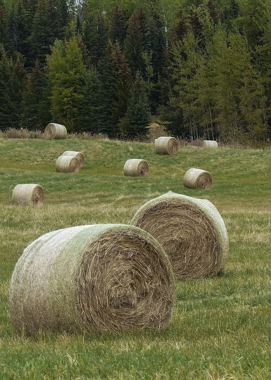 hay balls field free photo