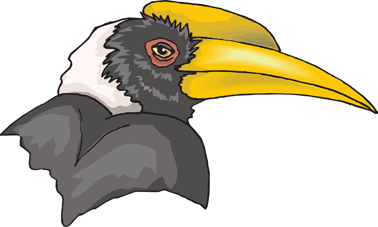 head bird hornbill free photo