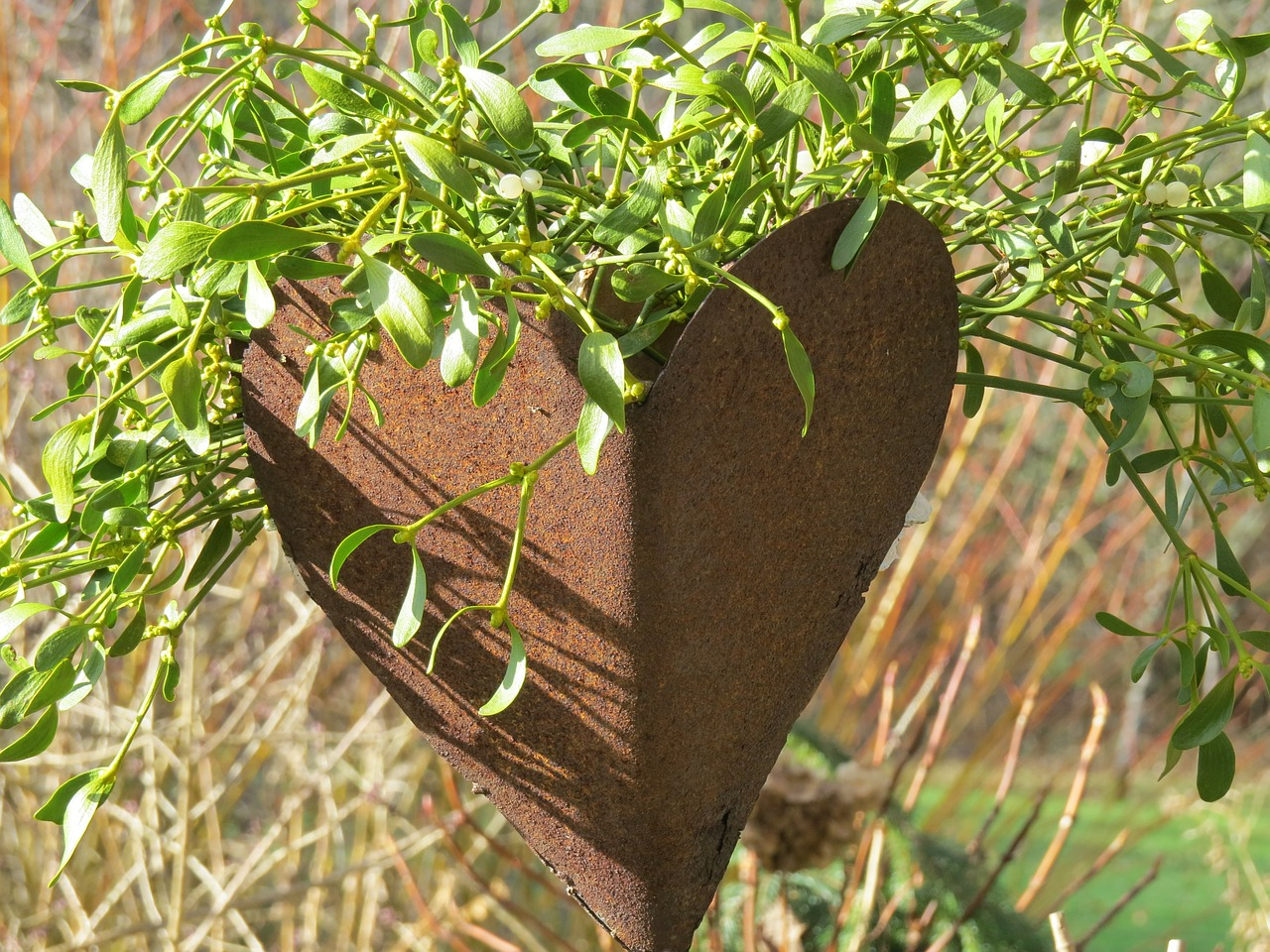 heart sheet flowerpot free photo