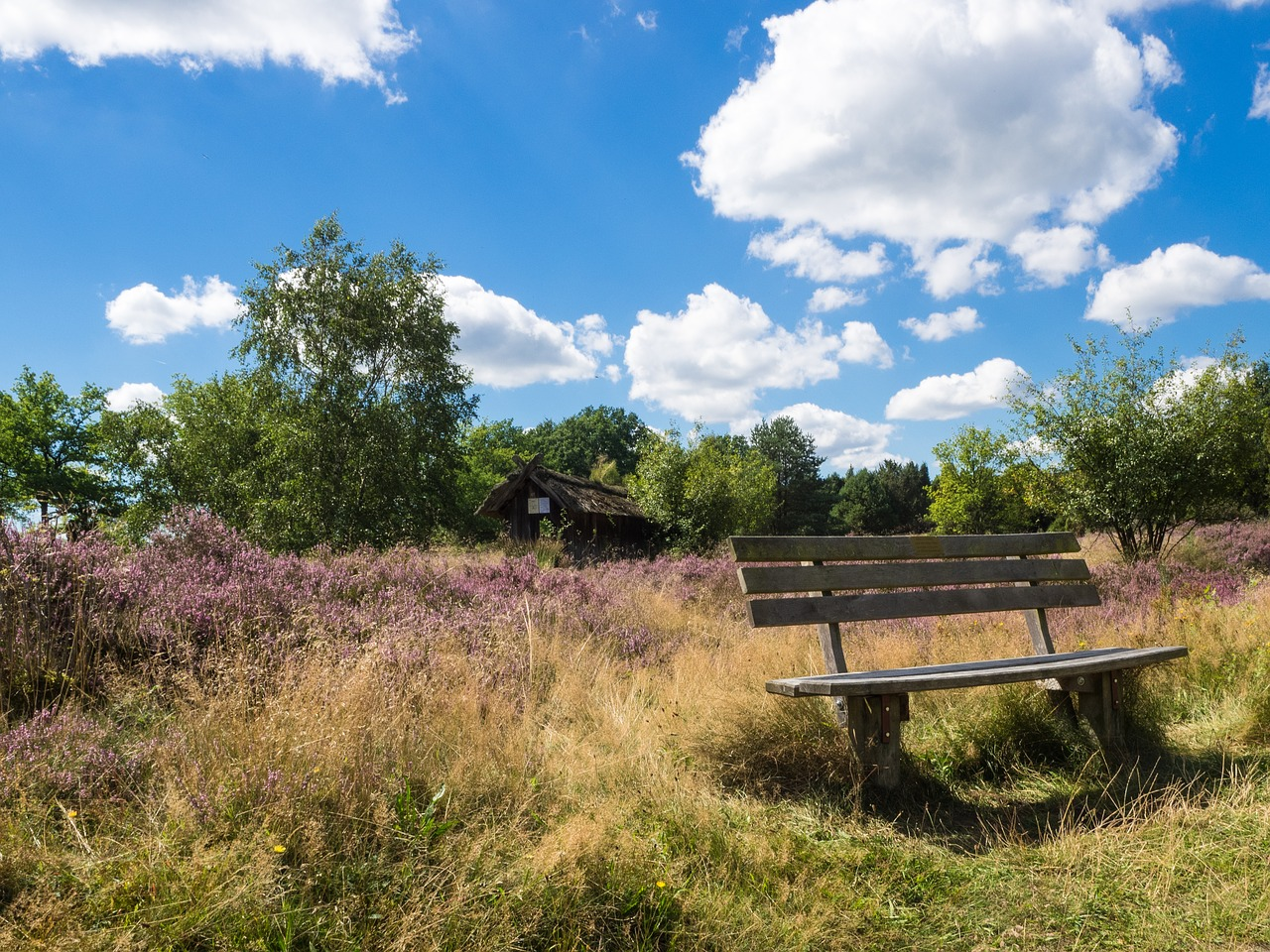 heide bench nature reserve free photo