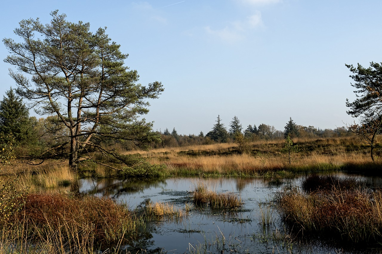 heide,heathland,erika,nature,tree,mood,nature reserve,langenhorner heide,autumn,free pictures, free photos, free images, royalty free, free illustrations, public domain