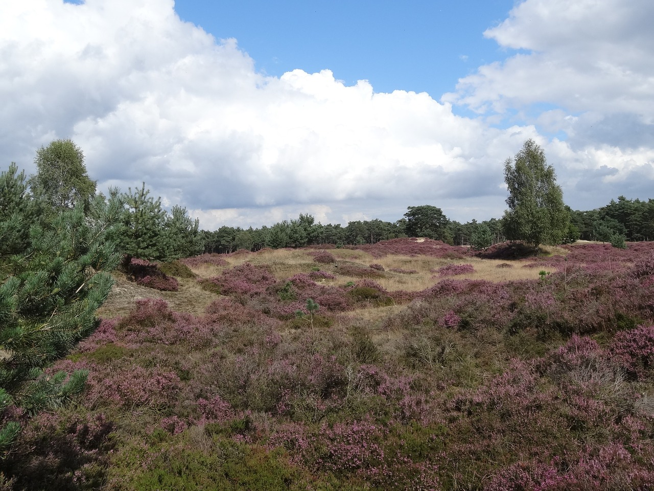heide landscape nature free photo