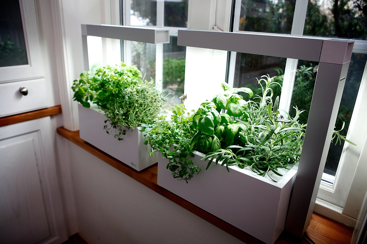herb growing herbs hydro system free photo