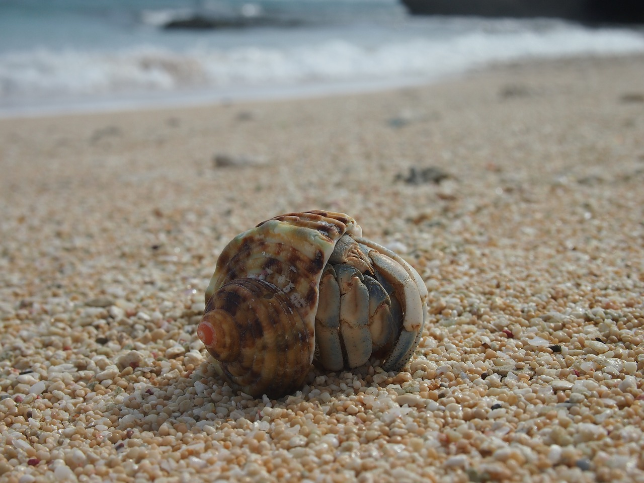 hermit crab yoron crab free photo