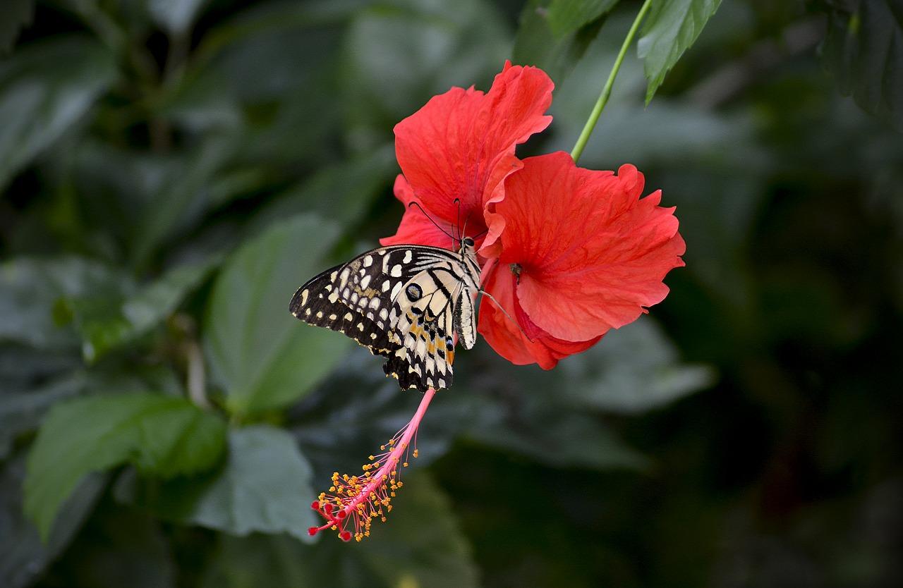 Hibiscusflowerredbloomingthe Stigma Free Photo From Needpixcom