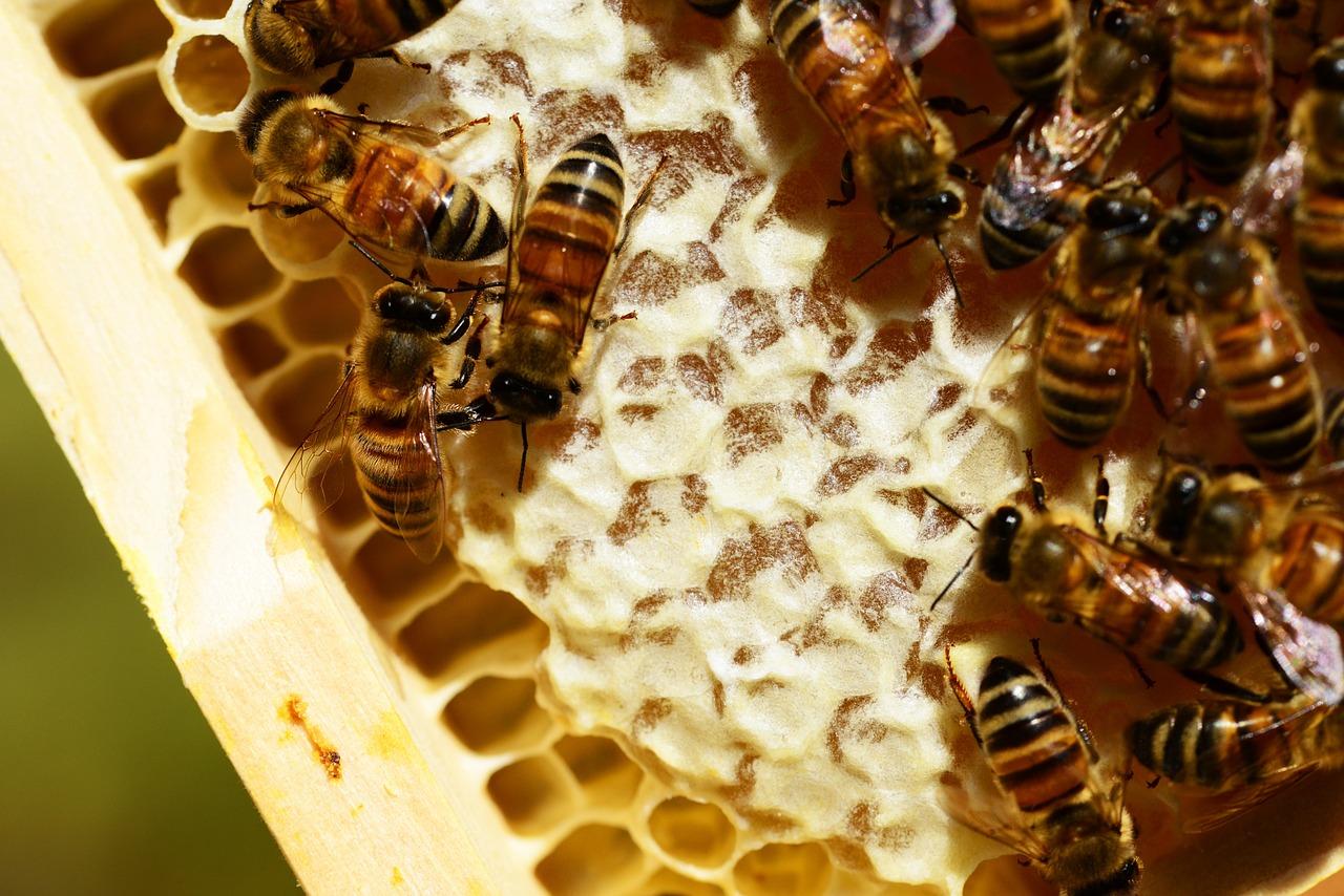 Картинки пчелы и мед