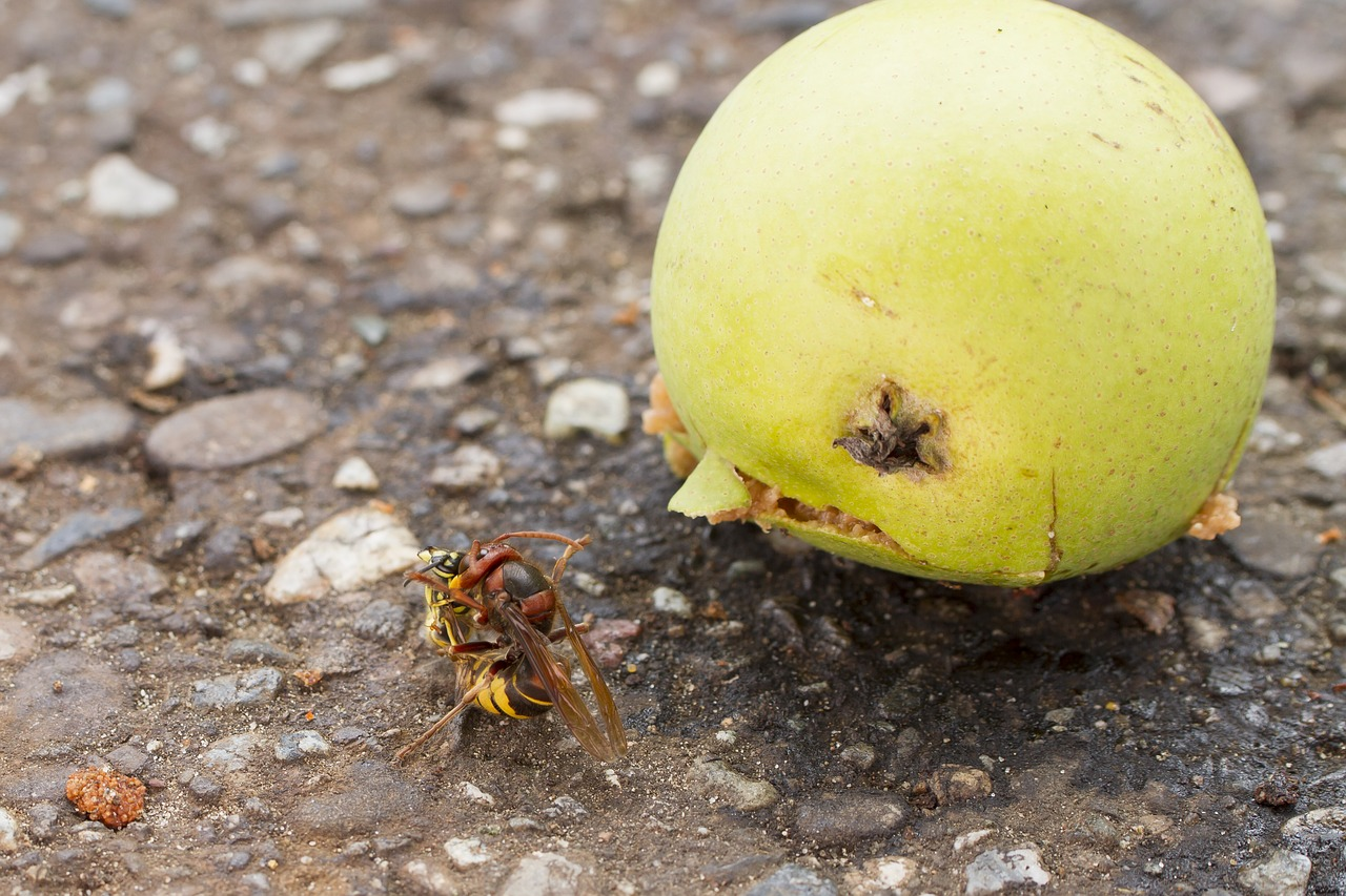 hornet wasp death throes