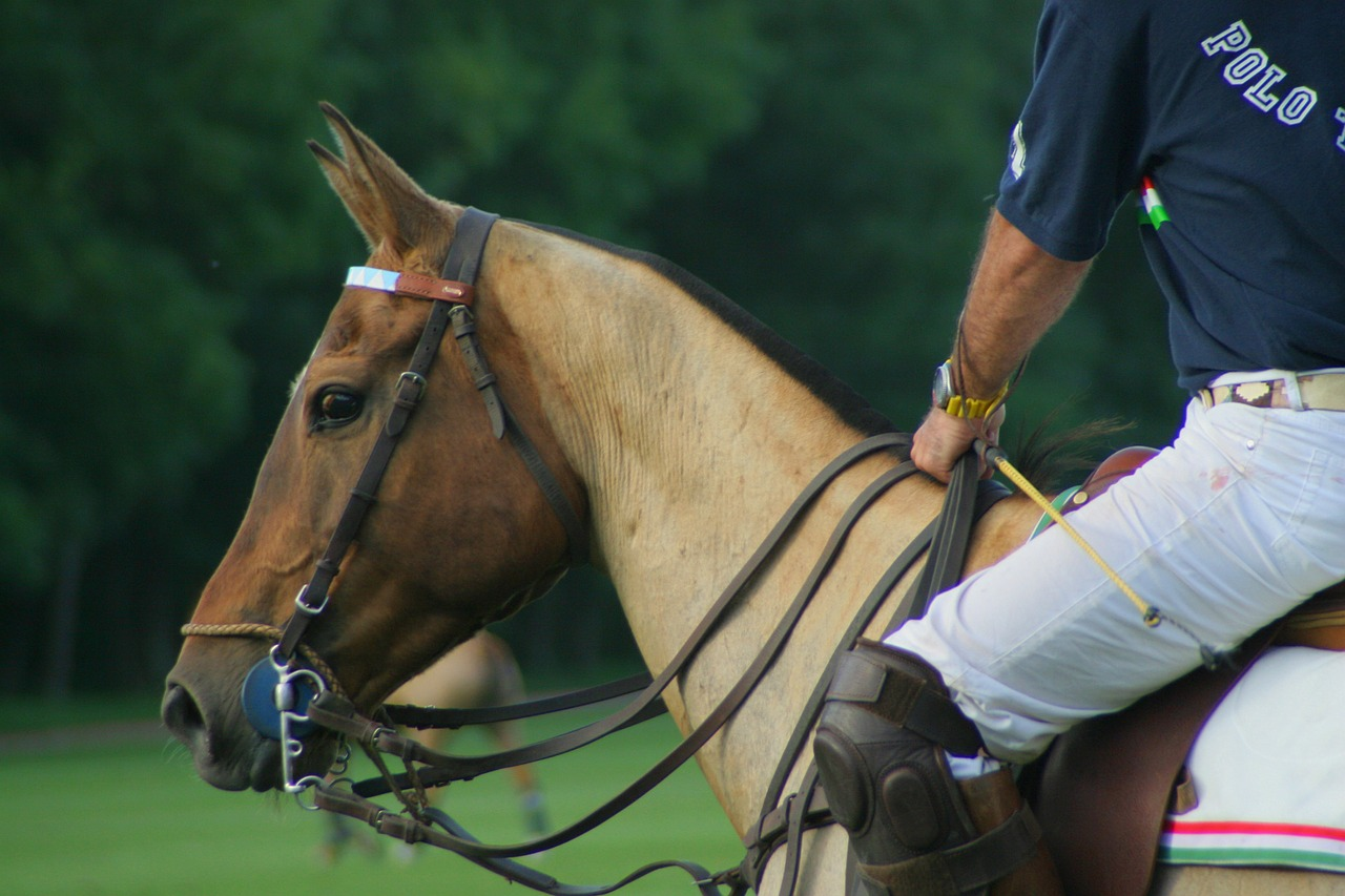 horse equine polo free photo