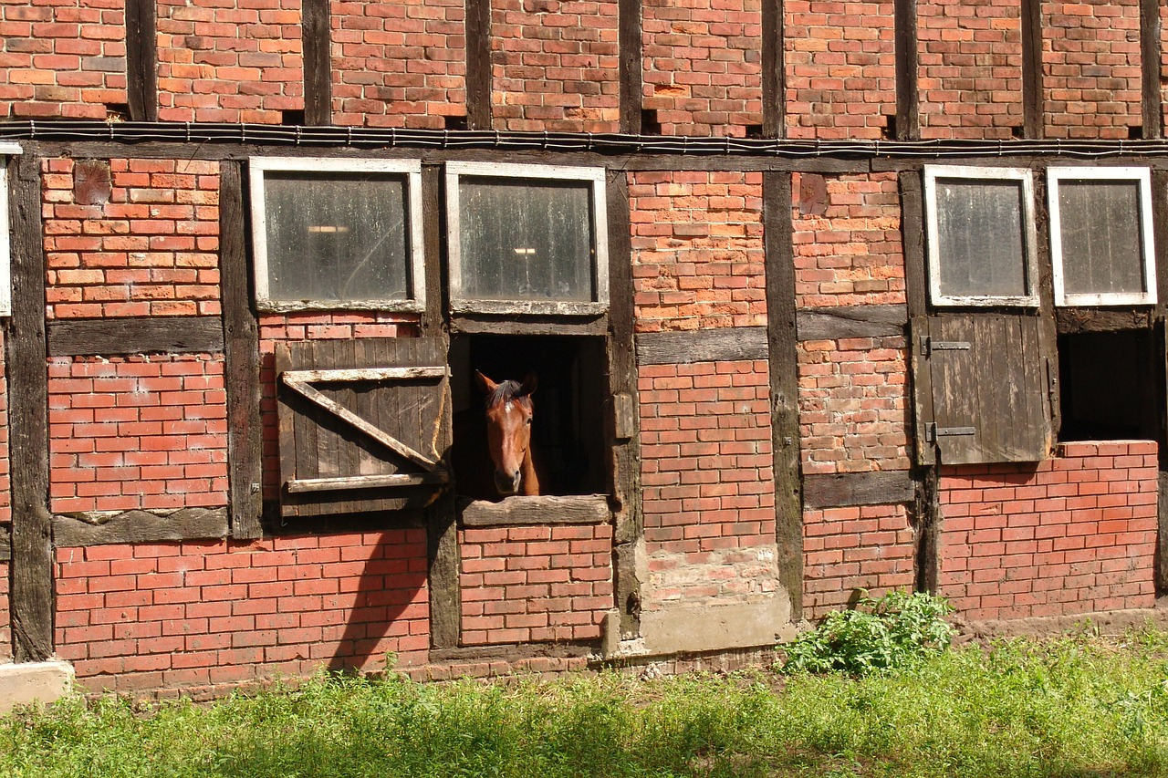 horse horse stable fachwerkhaus free photo