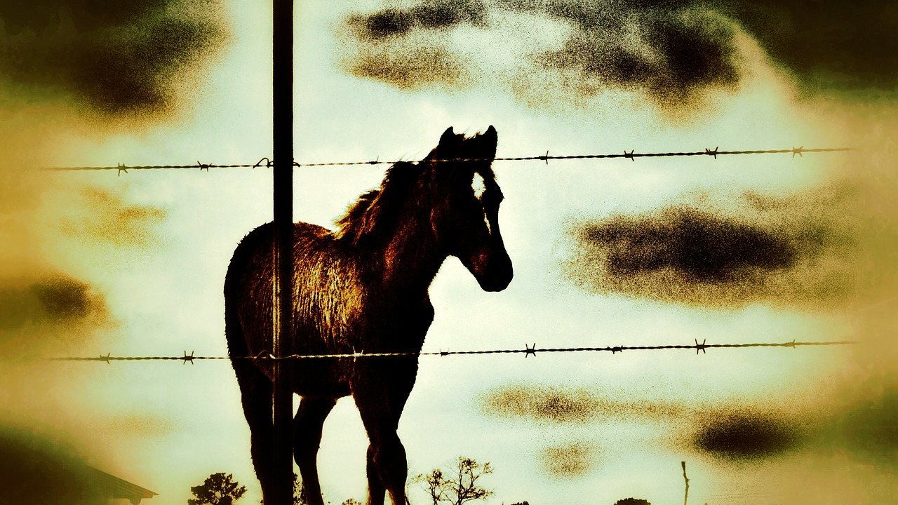 horse animal farm free photo