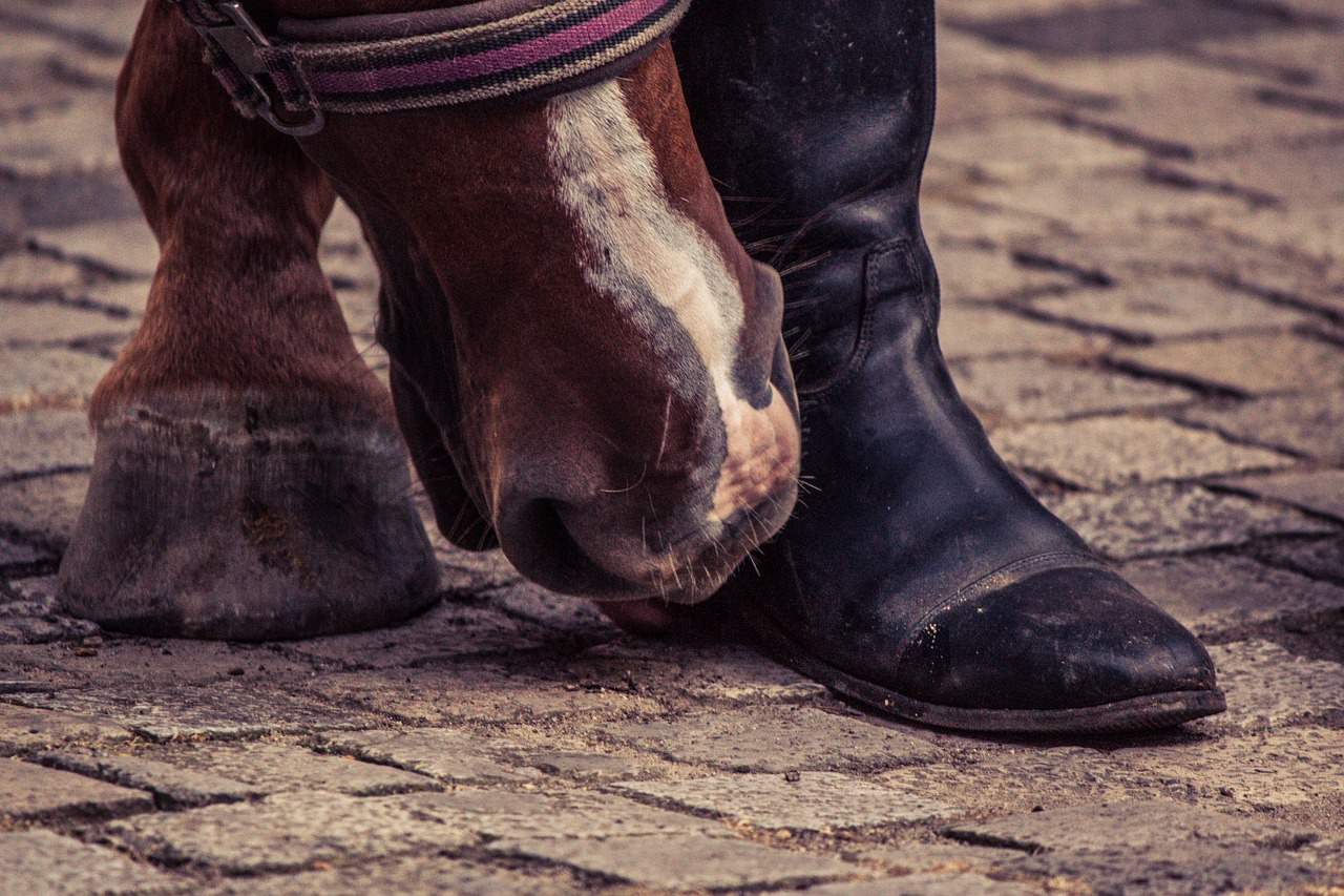 horse,huf,boots,horse hoof,foot,animal,free pictures, free photos, free images, royalty free, free illustrations, public domain