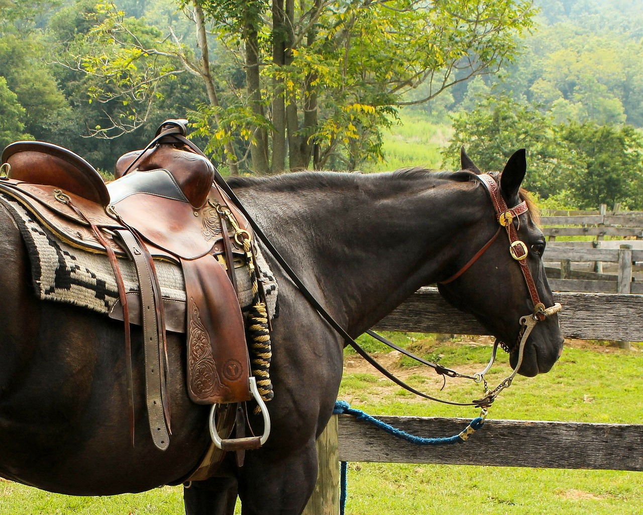 horse western saddle pomel free photo
