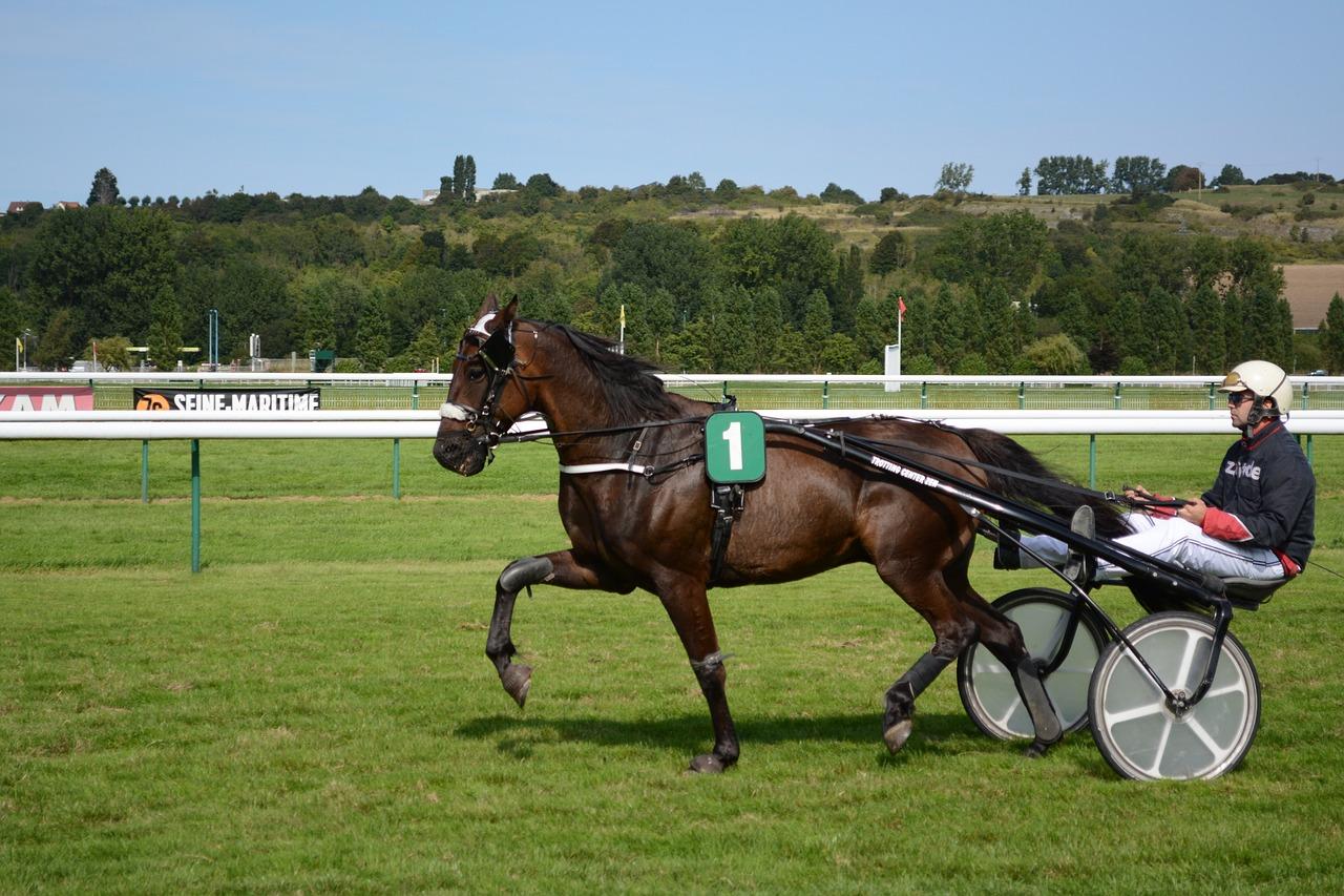 Horseracingjockeyshorse Racewarm Up
