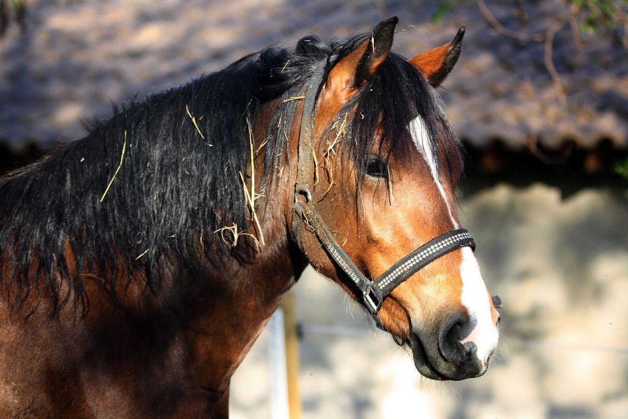 horse animal nature free picture