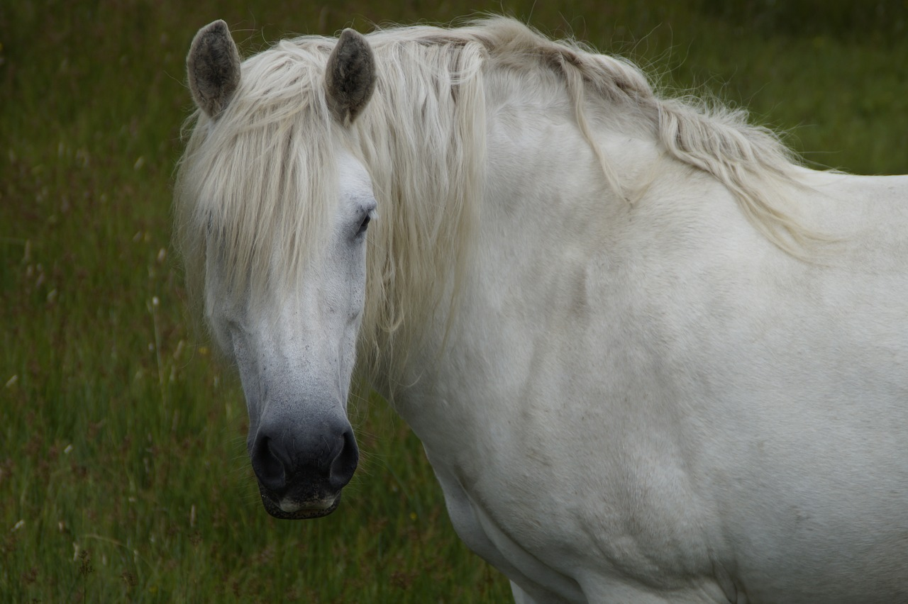 Horse Attention Beautiful Mane Aesthetic Free Image From Needpix Com