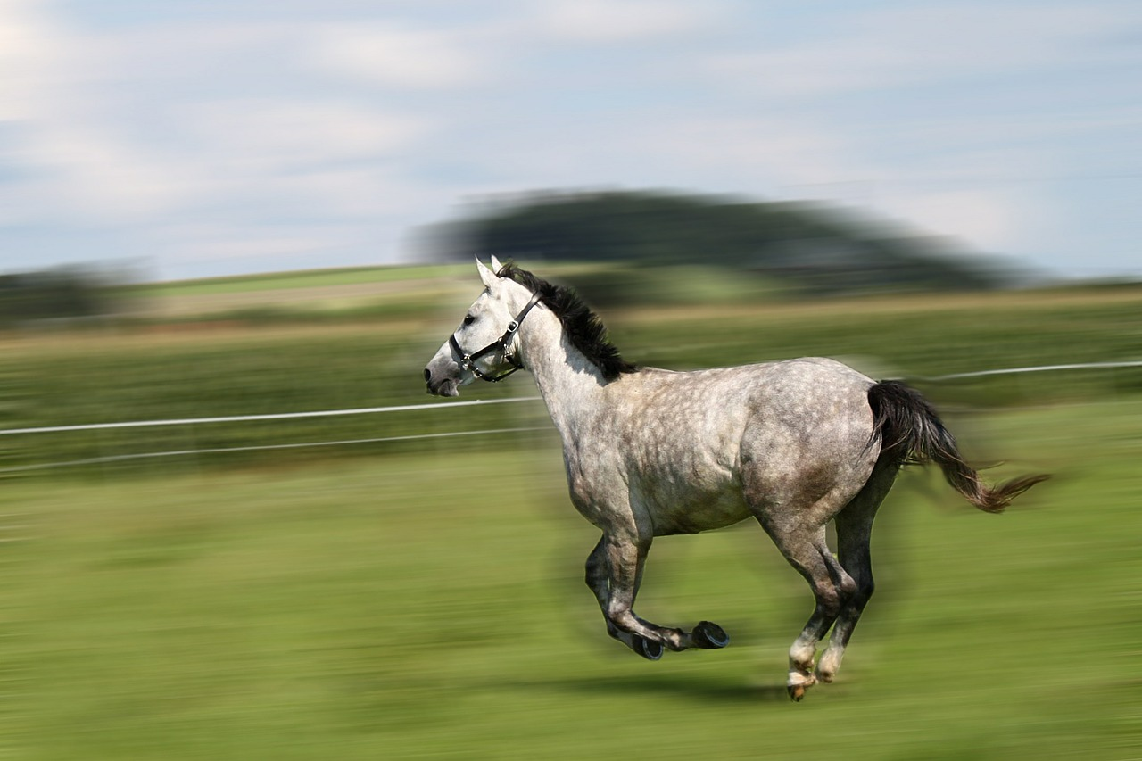 horse mold gallop free photo