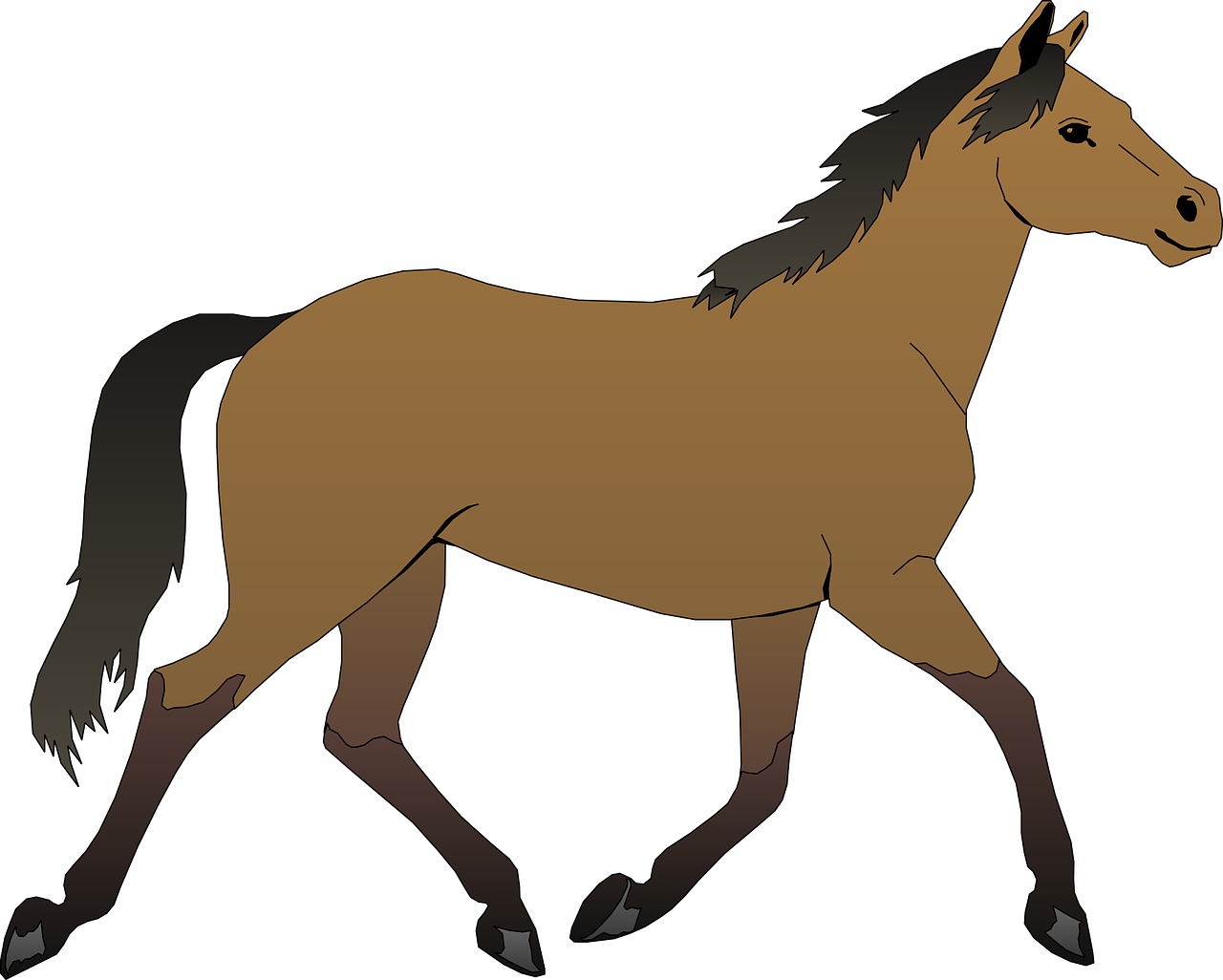 horse brown stallion free photo