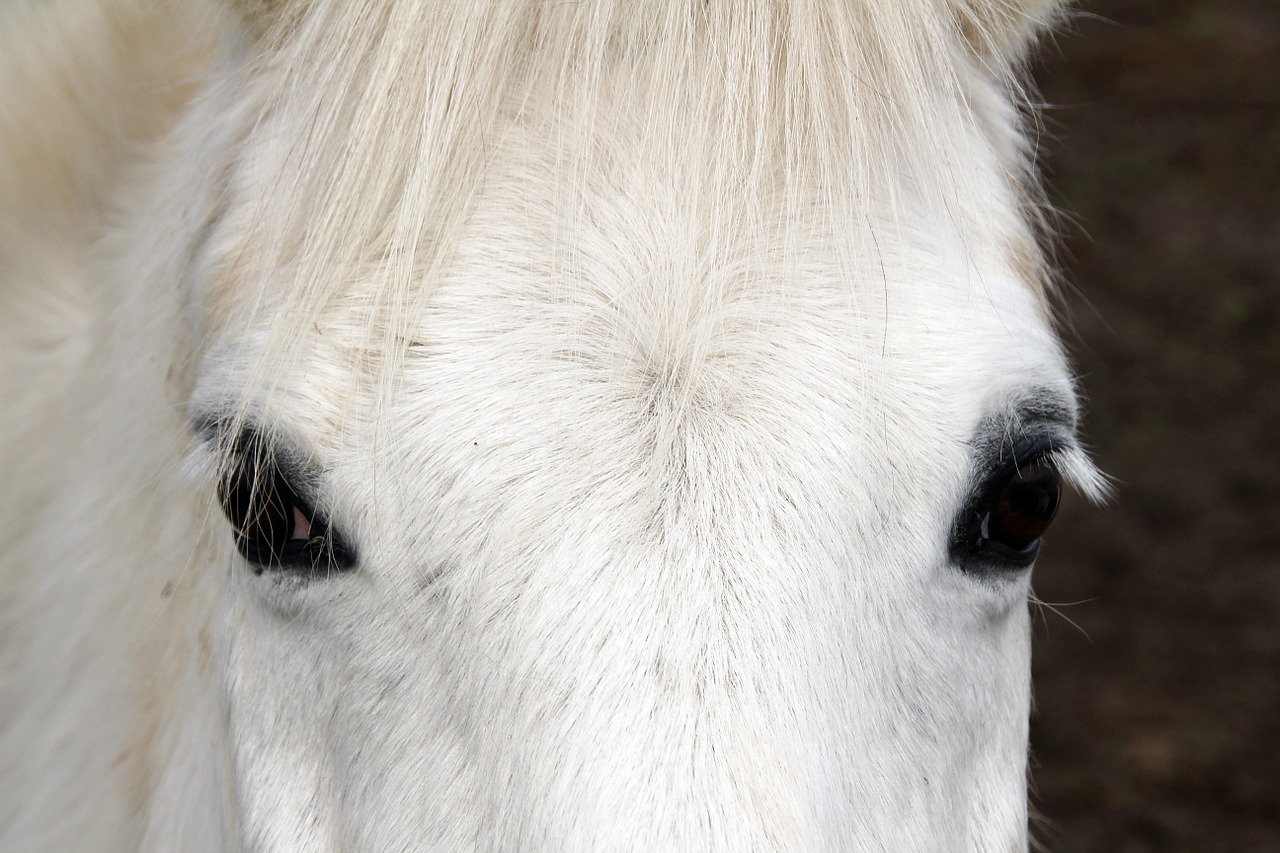 horse white animal free photo