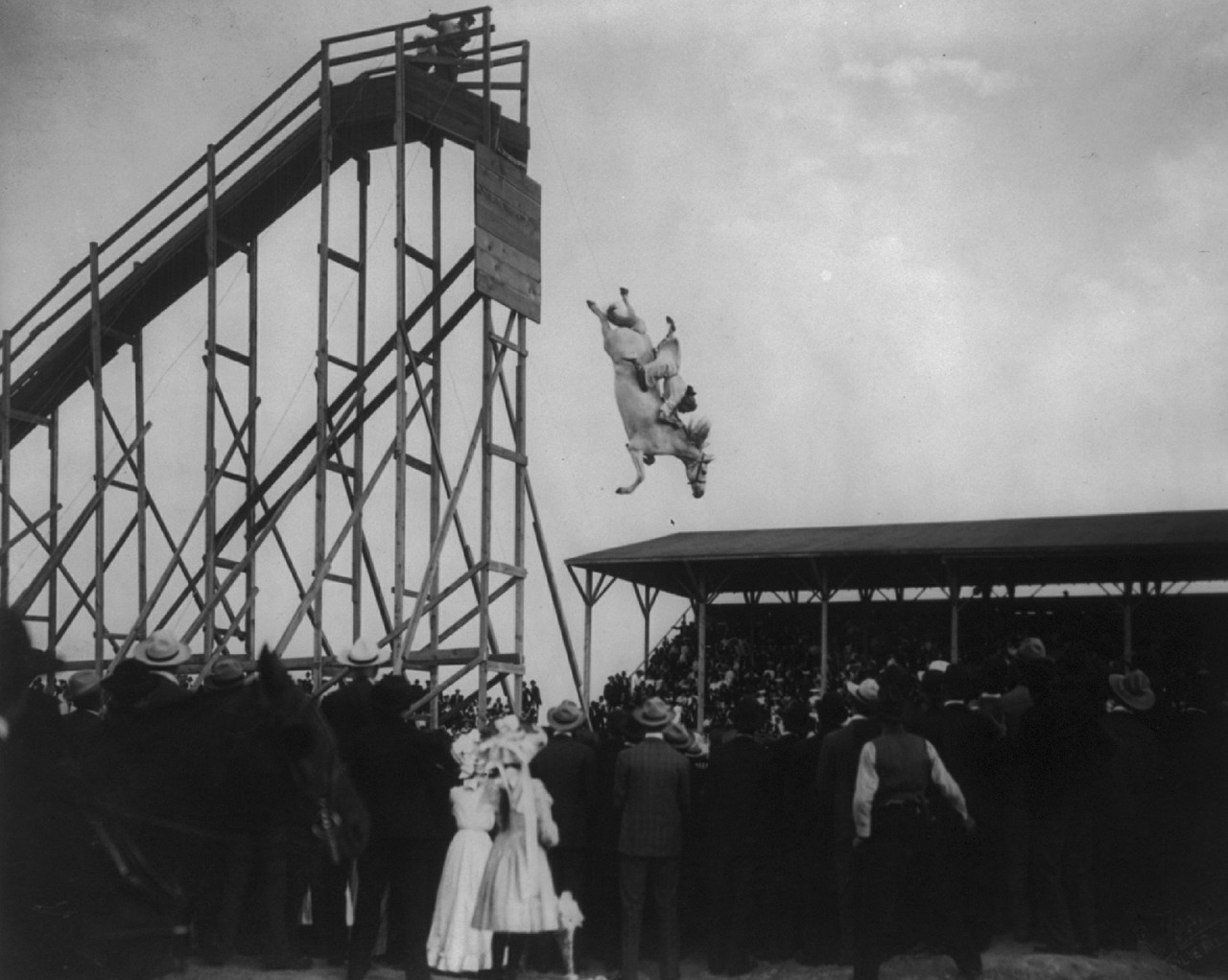 horse diving vintage jumping free picture