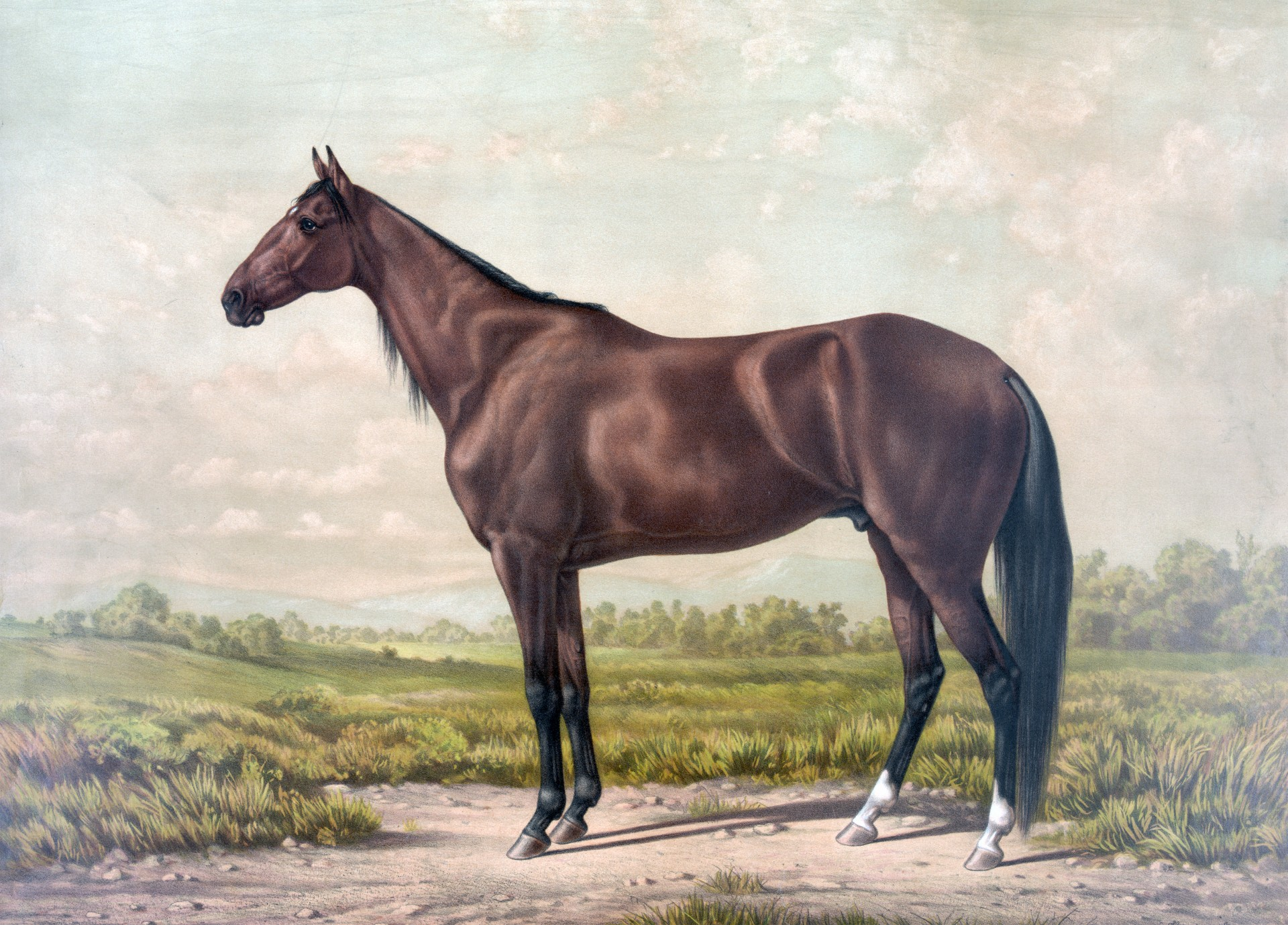 Horse Thoroughbred Vintage Painting Portrait Free Image From Needpix Com