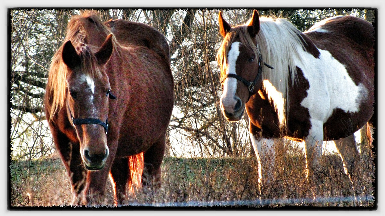 horses brown brown and white free photo