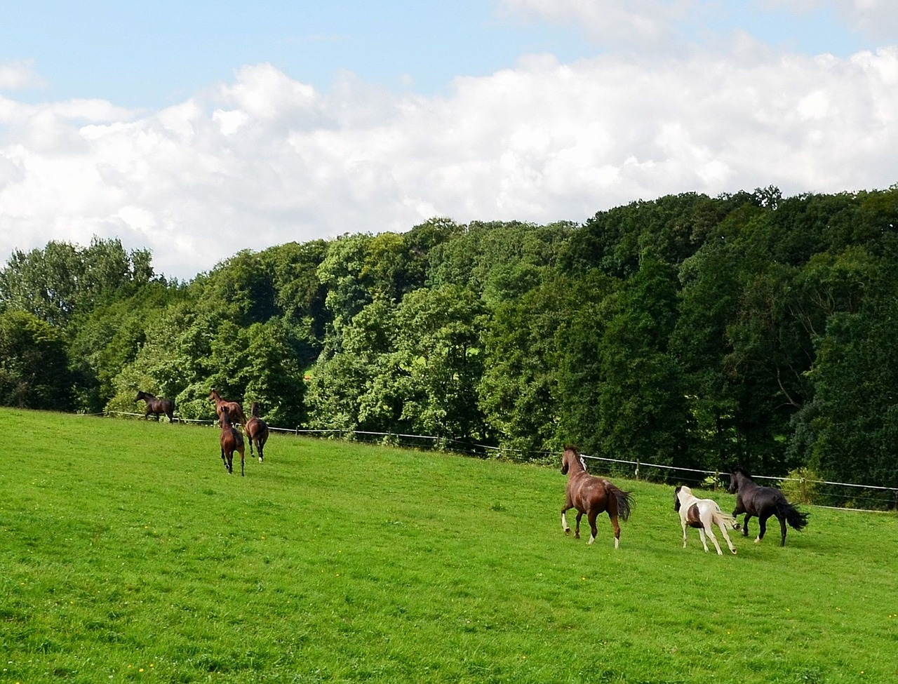 horses horse meadow gallop free photo