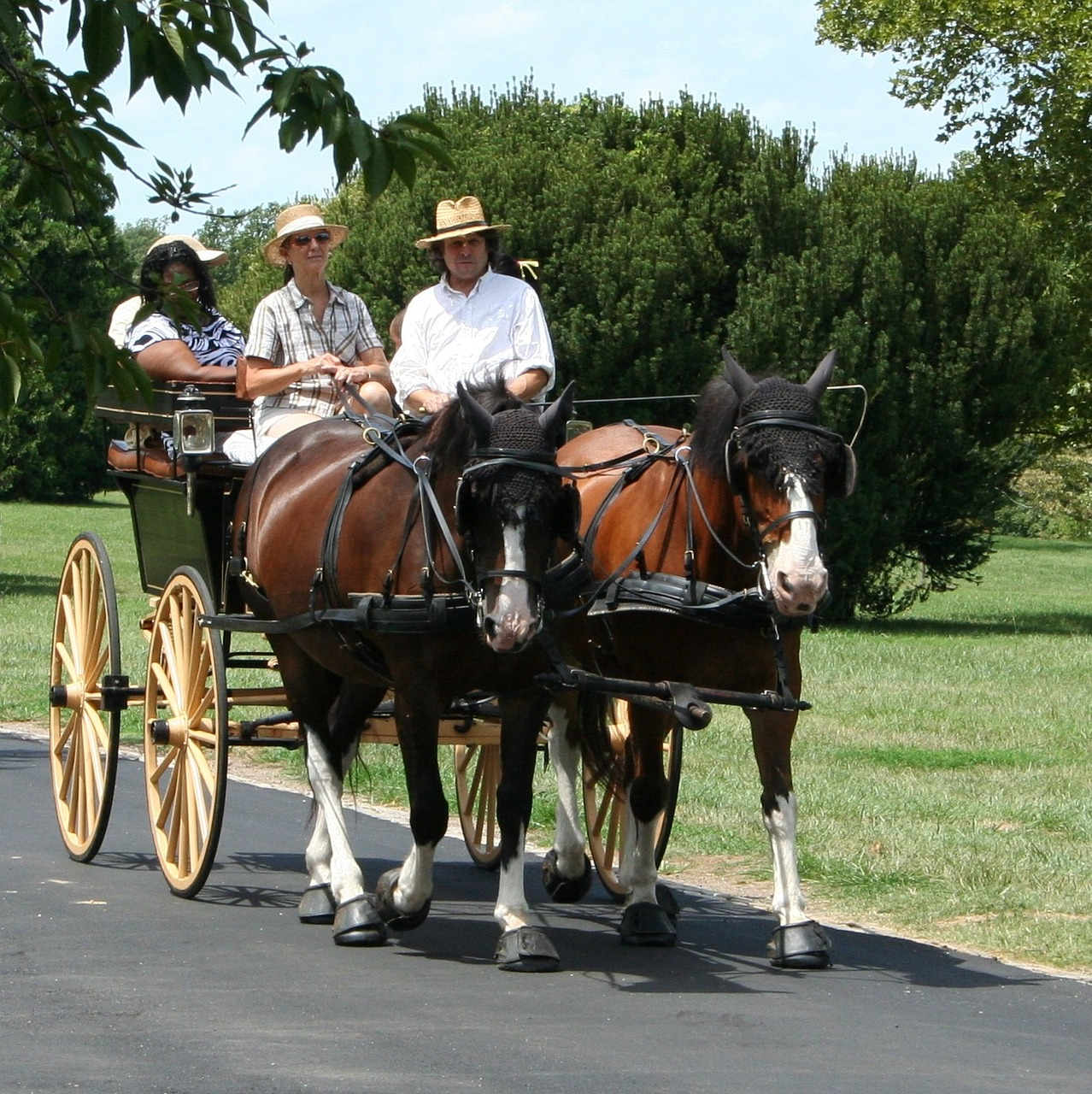 horses carriage tourist free photo