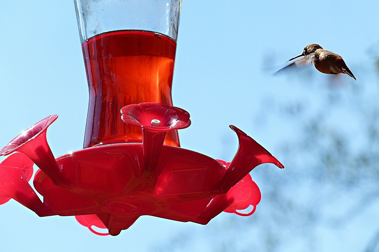 hummingbird bird feeding station free photo