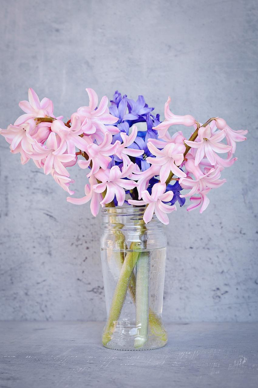 Hyacinthpinkblueflowerpink flower free photo from needpix hyacinthpinkblueflowerpink flowerblue flowerfragrant flower mightylinksfo