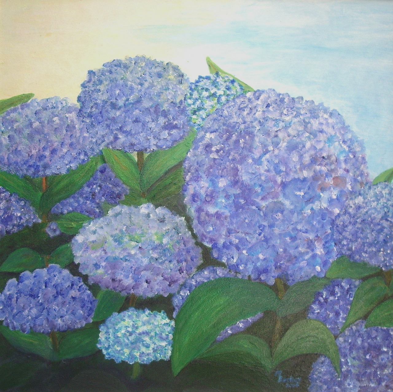 hydrangeas blue painting free photo