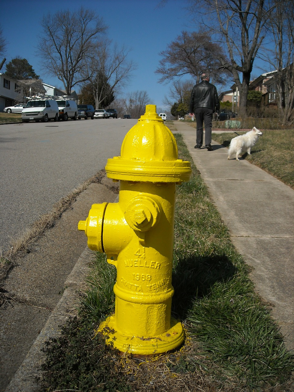 hydrant street dog free photo