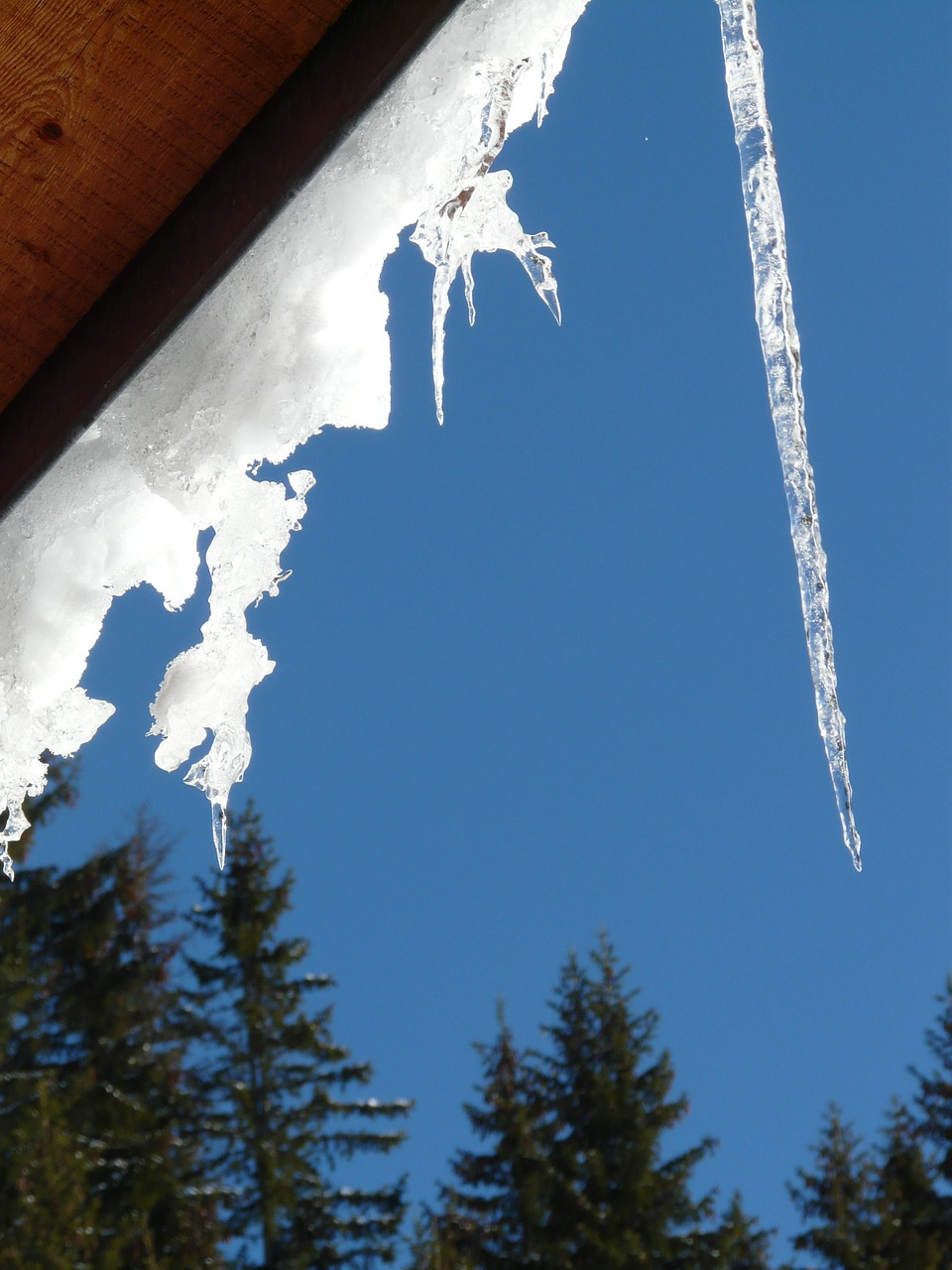 icicle winter snow free photo