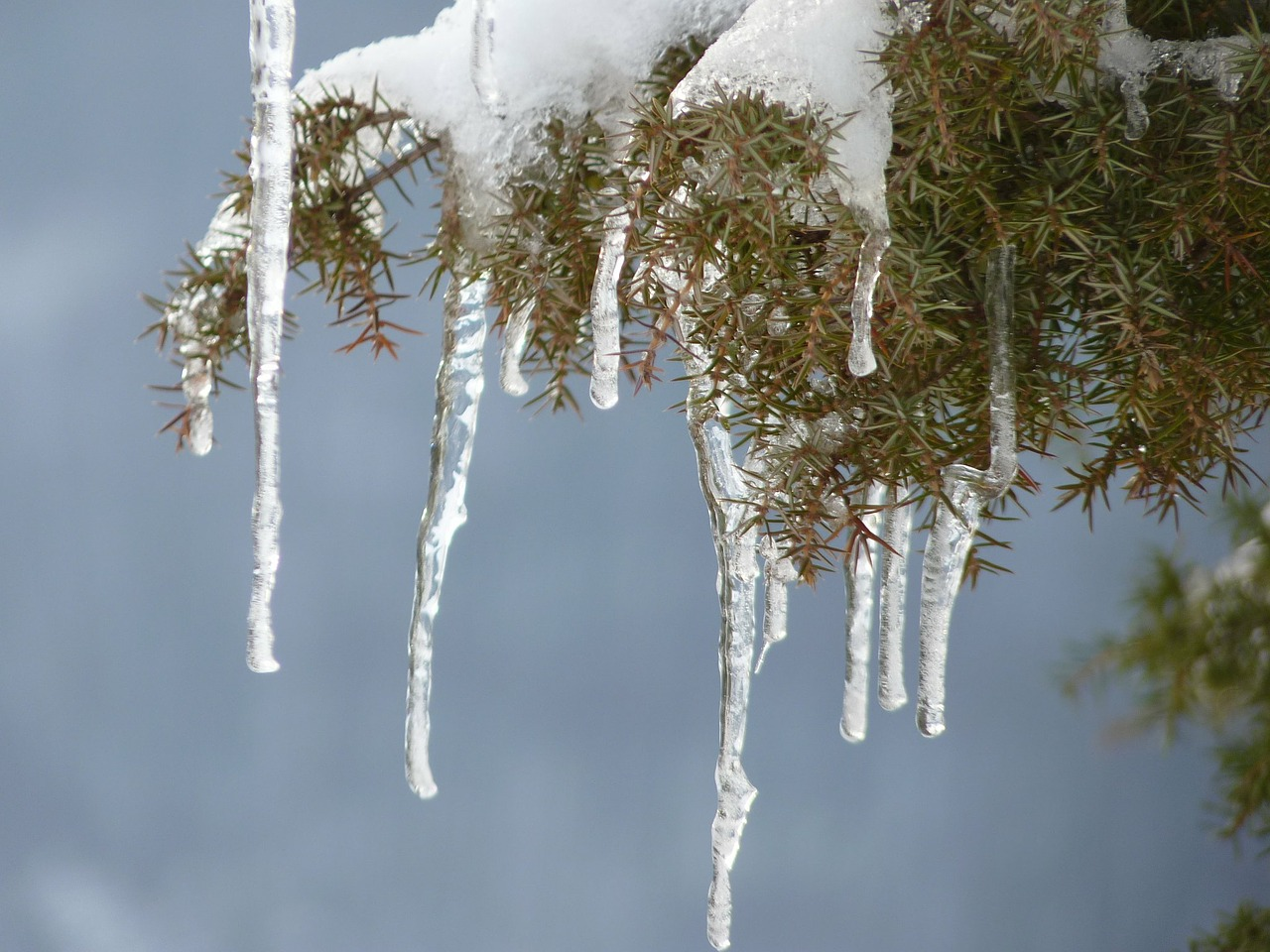 icicle ice winter free photo