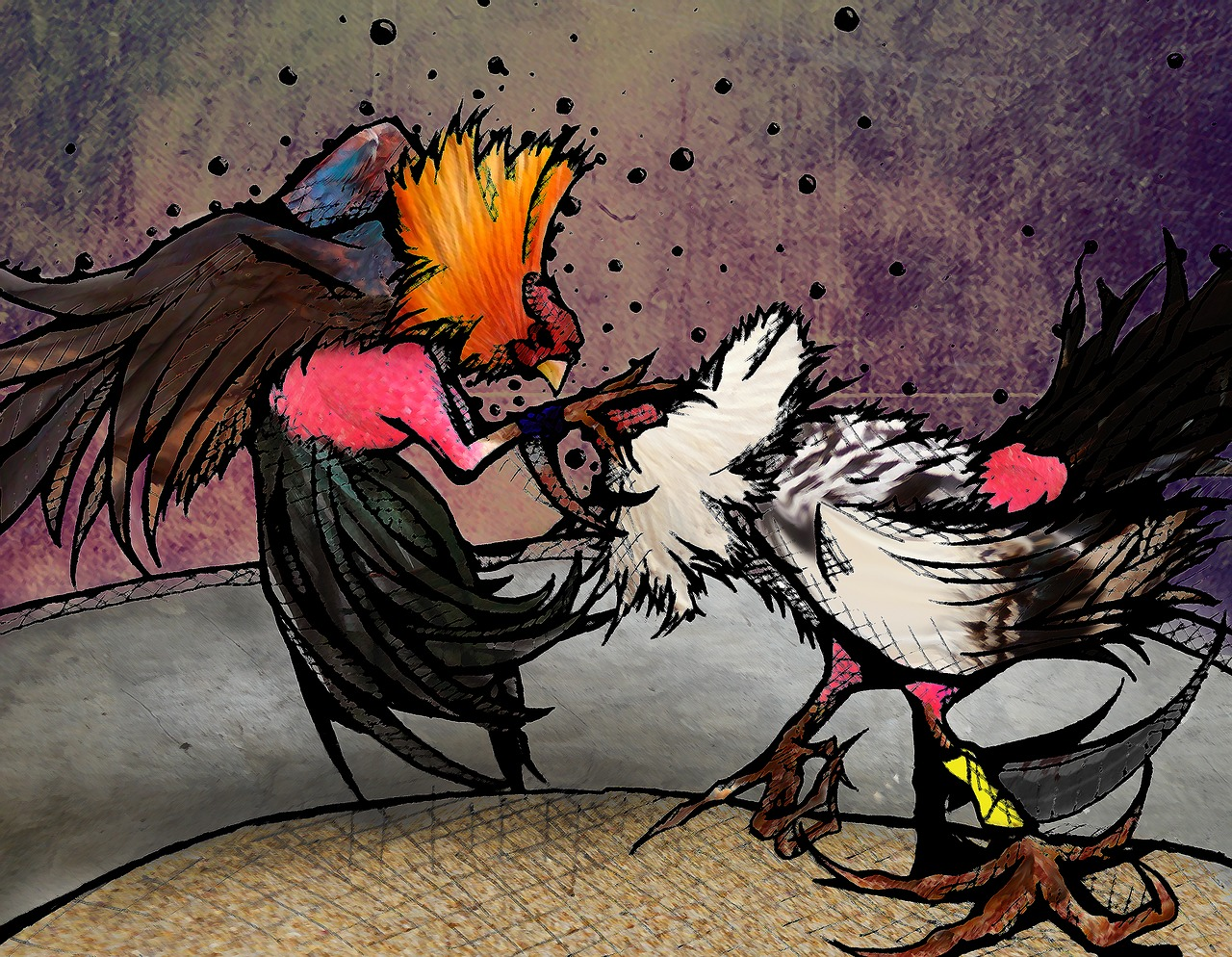 illustration roosters fight free photo