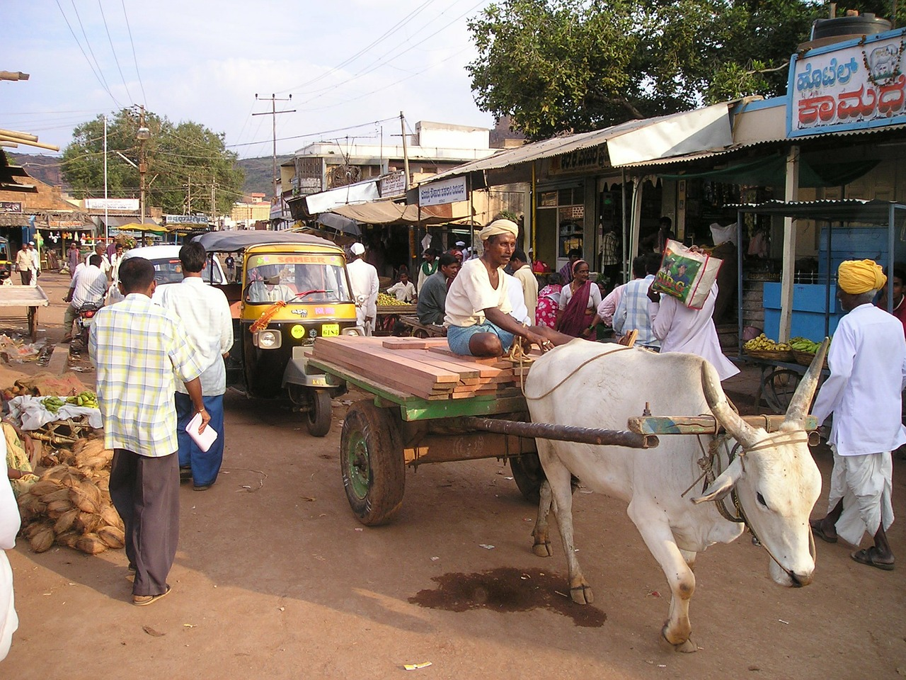 india oxcart oxen free photo