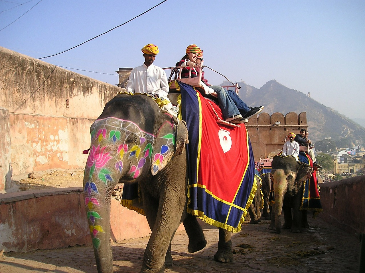 india elephant transport free photo