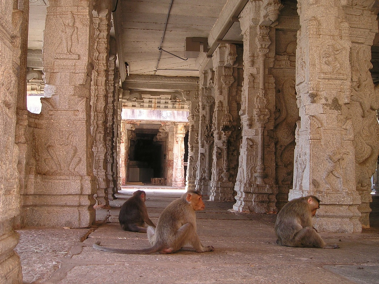 india,ape,temple,ape horde,monkey family,free pictures, free photos, free images, royalty free, free illustrations, public domain