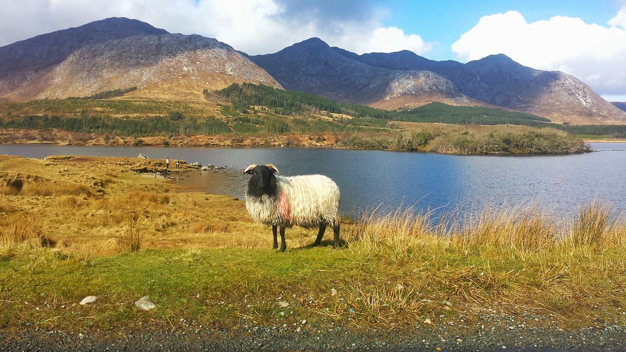 Ireland,connemara,europe,street,path - free image from needpix.com