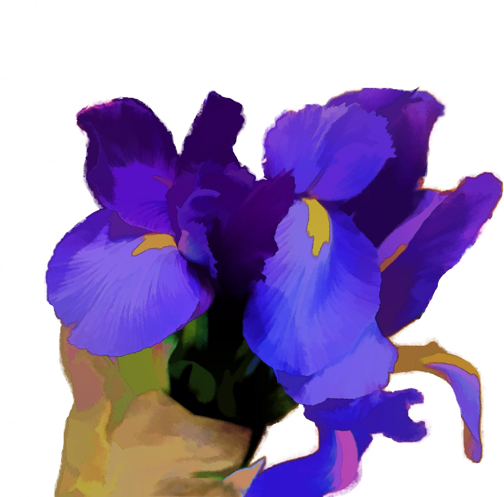 Irisfloweryellowpurplecolor free photo from needpix iris flower yellow izmirmasajfo