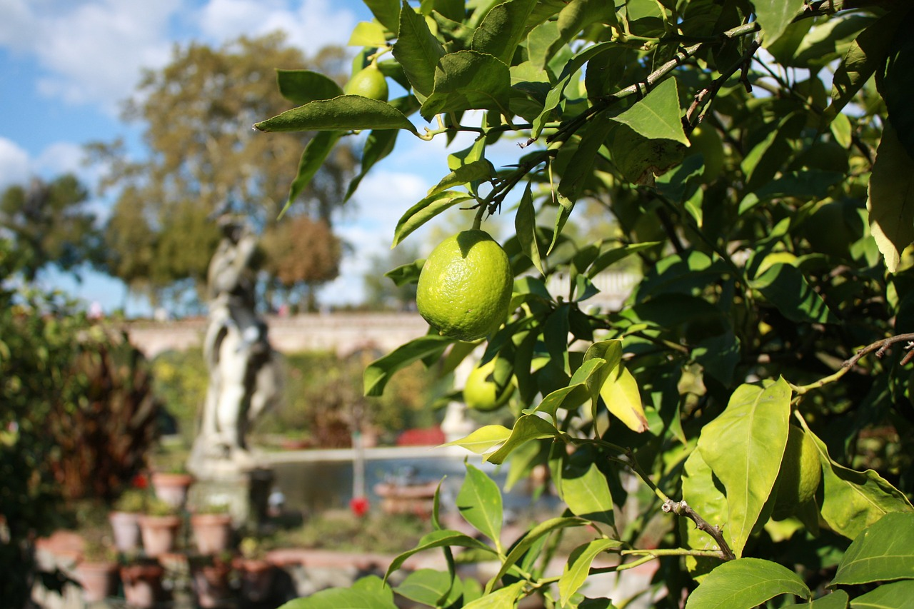 italy,sun,lime,garden,lemon,holiday,relaxation,green,statue,autumn,lucca,free pictures, free photos, free images, royalty free, free illustrations, public domain