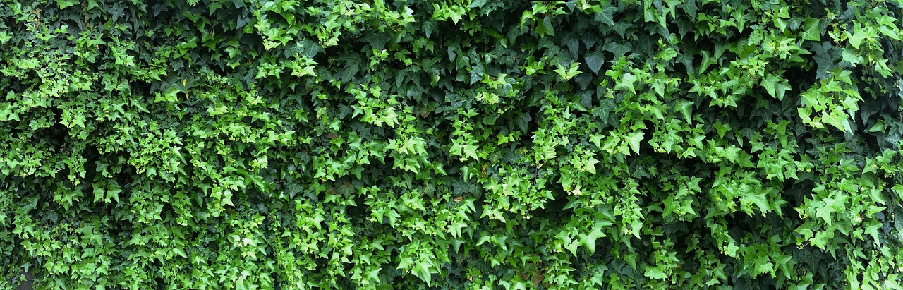 ivy fence grass free photo