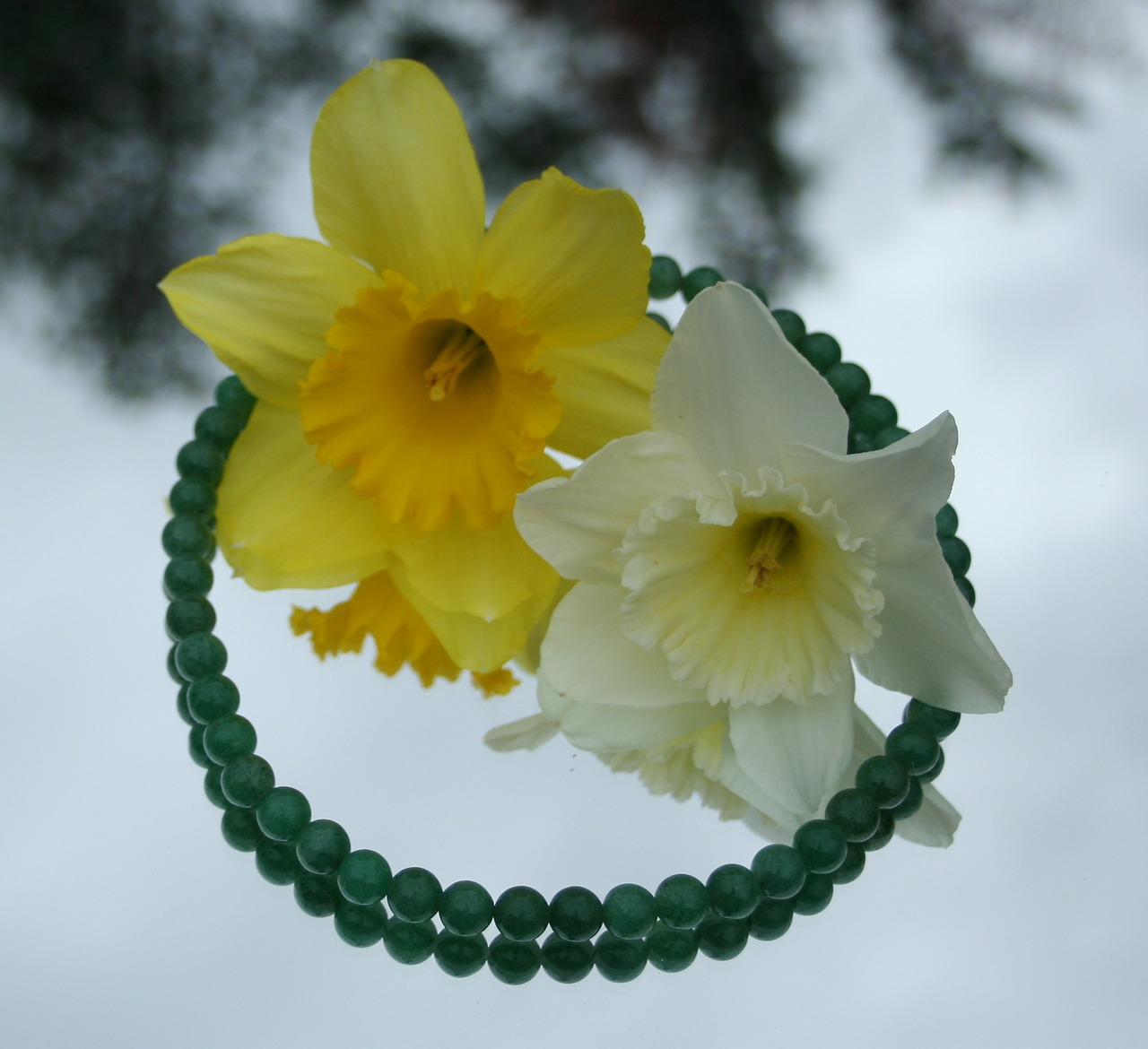 jade necklace daffodils free photo
