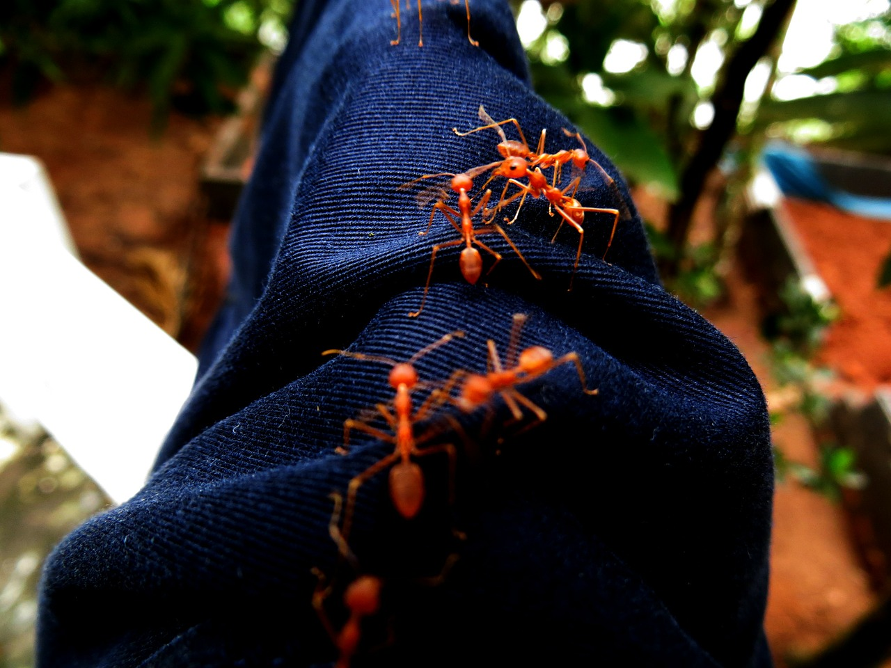 jeans denim ants free photo