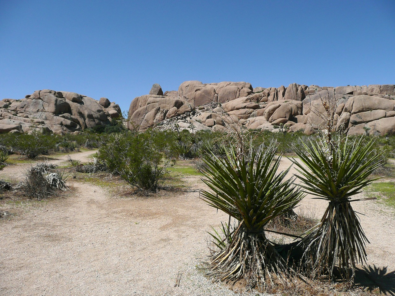 joshua tree national park landscape nature free photo