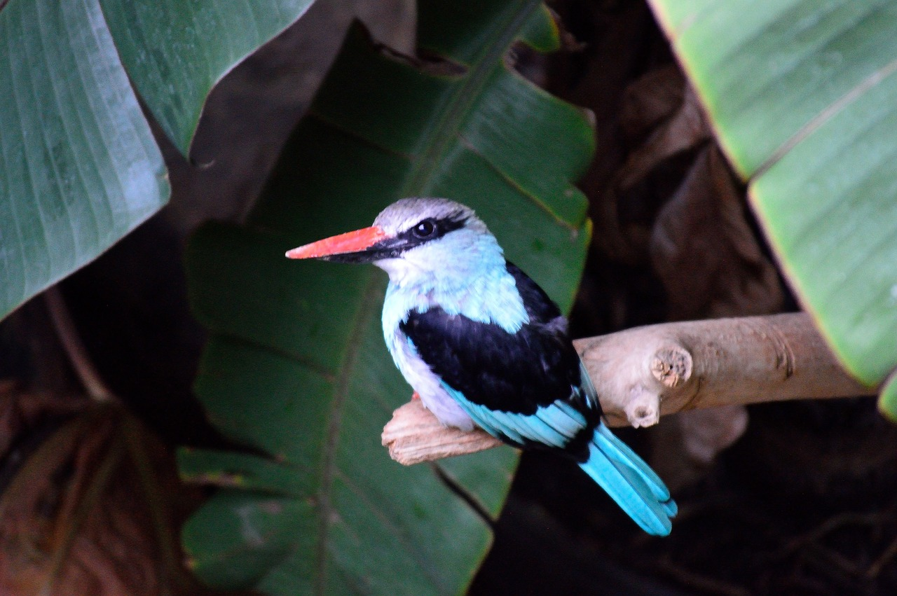 kingfisher exotic colorful free photo