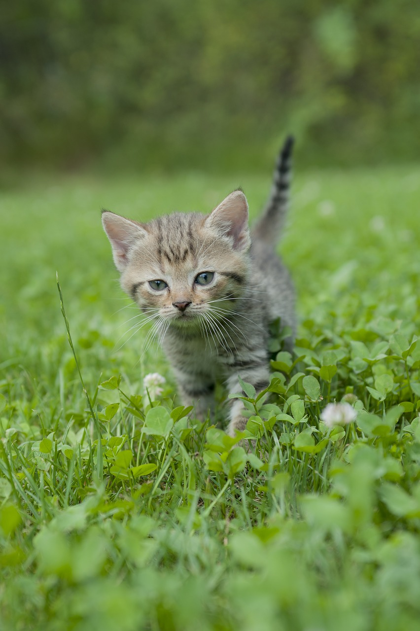 Download Free Photo Of Kitten Cat Tiger Cat Young Cat Baby Cat From Needpix Com
