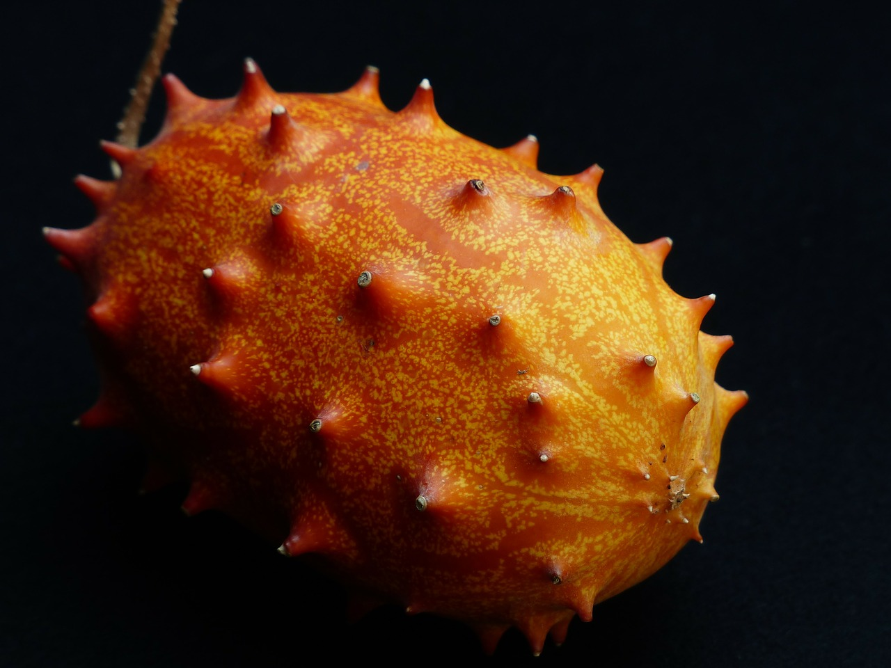 kiwano fruit horn cucumber free photo
