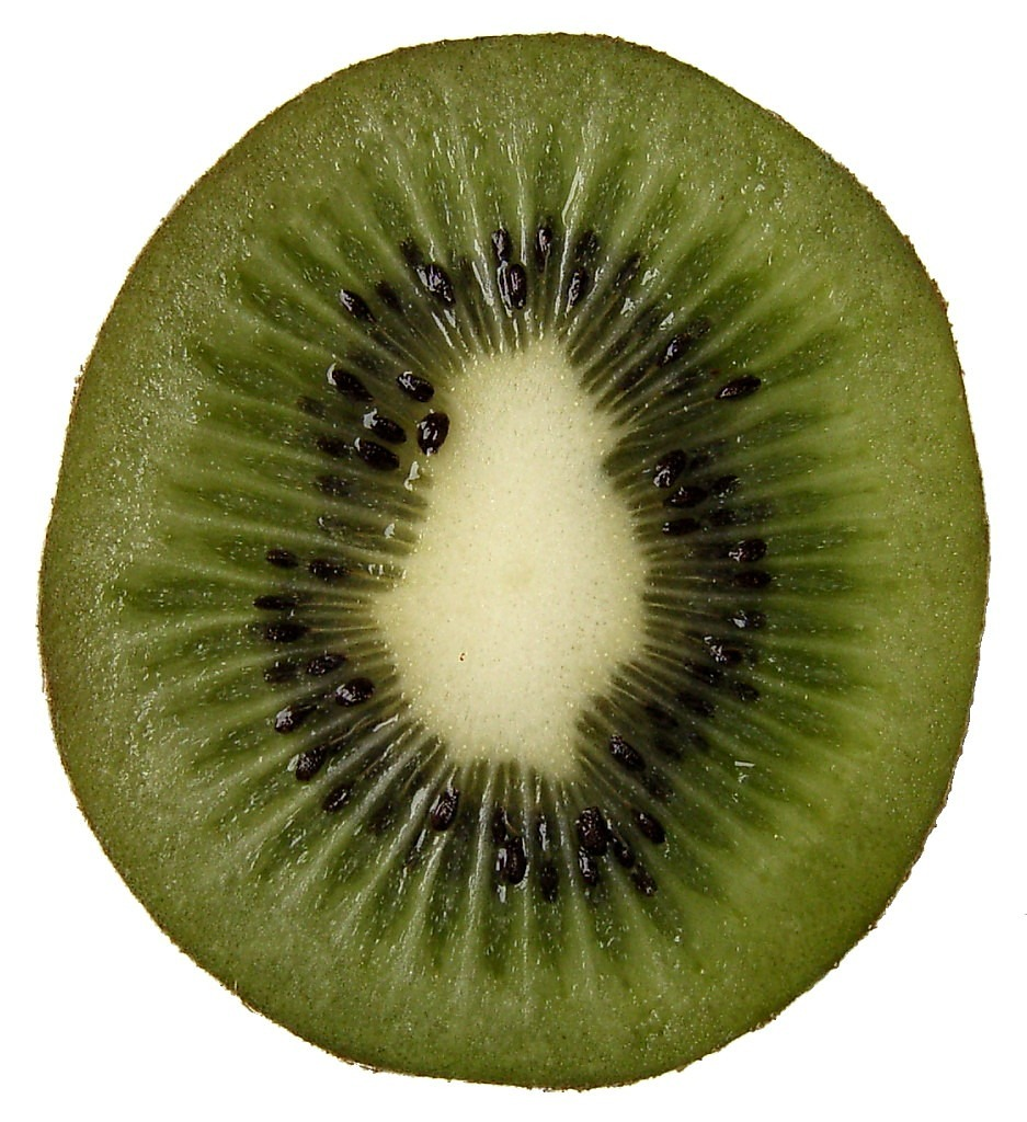 kiwi fruit kiwi fruit free photo