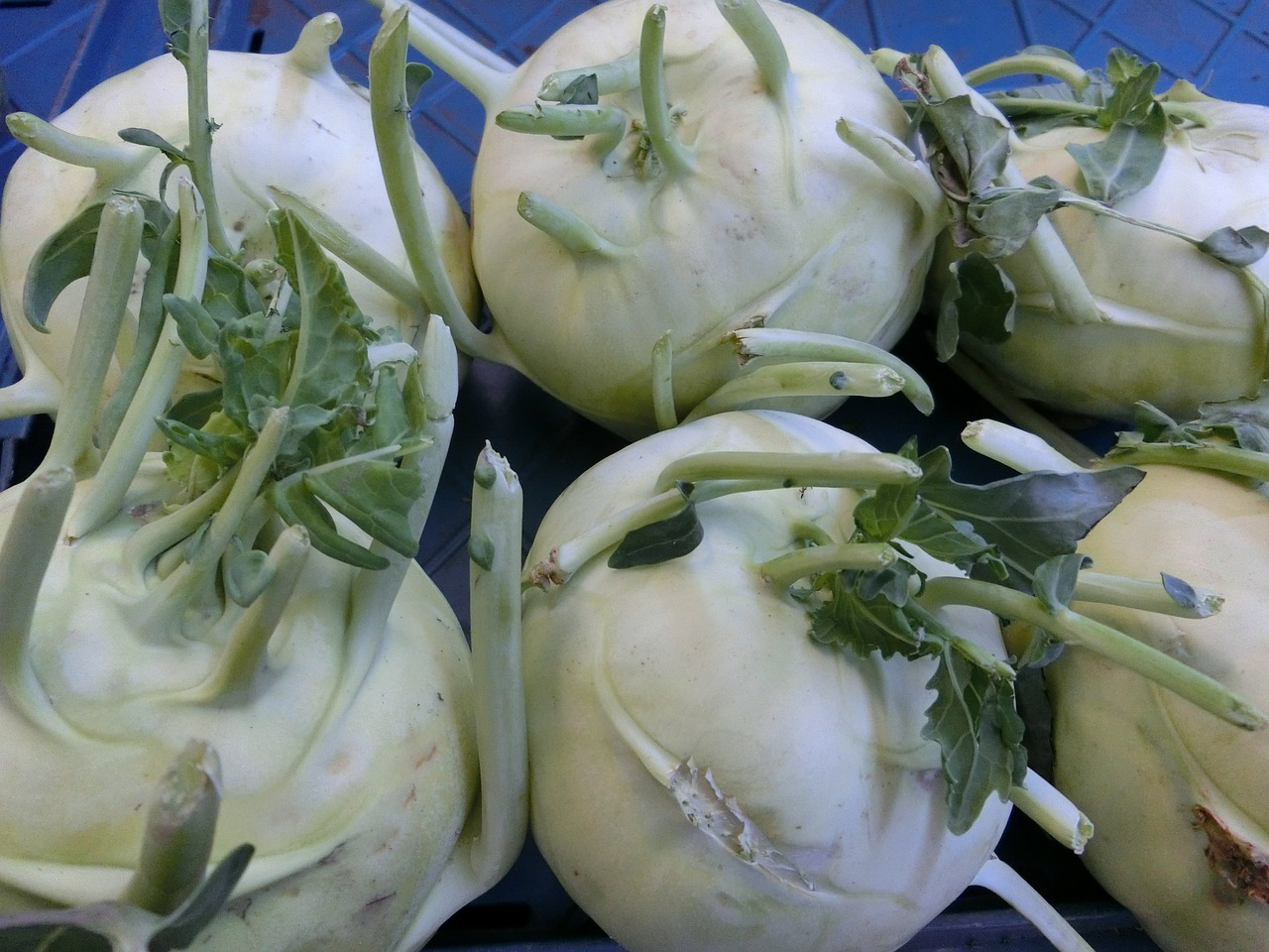 kohlrabi vegetables healthy free photo